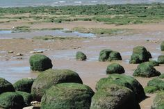 Moss covered rocks at Hunstanton beach, Norfolk, England