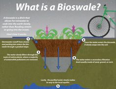Bioswales are landscape elements designed to remove silt and pollution from surface runoff water. They consist of a swaled drainage course with gently sloped sides (less than six percent) and filled with vegetation, compost and/or riprap Permaculture Design, Permaculture Principles, Landscape Elements, Landscape Design, Landscape Architecture, Runoff Water, Water Water, Water Plants, Rainwater Harvesting System