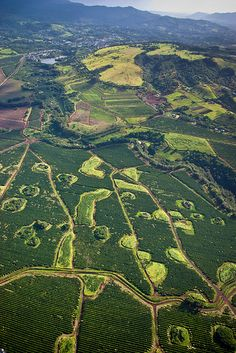 Coffee Plantation, Kauai, Hawaii  Want to visit this place!