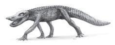 Resultado de imagen de Anatosuchus