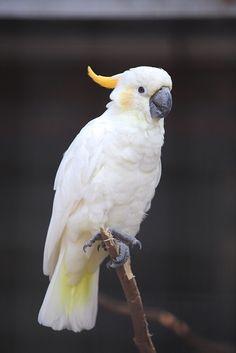 Majestic Animals, Rare Animals, Felt Animals, Funny Birds, Cute Birds, Funny Photography, Animal Photography, Macaw Parrot For Sale, Australia Animals