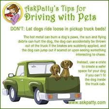 Great tips on traveling with pets!