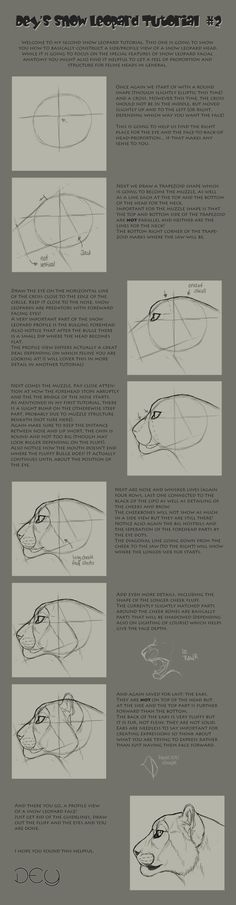 Tutorial: Snow Leopard Head #2 by ~DeyVarah on deviantART