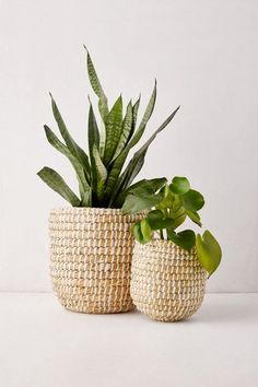 Provide boho appeal to sunlit corners of your area when you house your own favorite ferns in this particular basket woven planter. **Content + Care** - Seagrass - Wipe clean -- Imported **Size** - Little dimensions: 7 Plant Basket, Basket Planters, Indoor Planters, Planter Pots, Indoor Gardening, Baskets For Plants, Wicker Baskets, Indoor Plant Decor, Wicker Planter