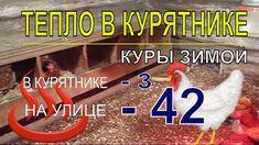 Почему в КУРЯТНИКЕ ЗИМОЙ ТЕПЛО ПРИ - 42 / Куры несушки зимой / Содержа...