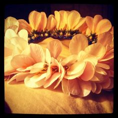Pink and white flower crown for lil Bs Halloween costume White Flower Crown, White Flowers, Halloween Costumes, Plants, Pink, Garden, White Wreath, Garten, Hot Pink