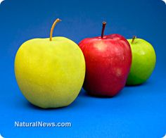 Canadian farmers reject GM apples