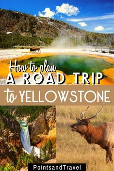 The Ultimate Road Trip Guide to Yellowstone cruise travel travel cove travel teton national smoky mountains vacation national park Cruise Travel, Travel Usa, Travel Tips, Alaska Travel, Travel Packing, Travel Essentials, Budget Travel, Travel Logo, Alaska Cruise