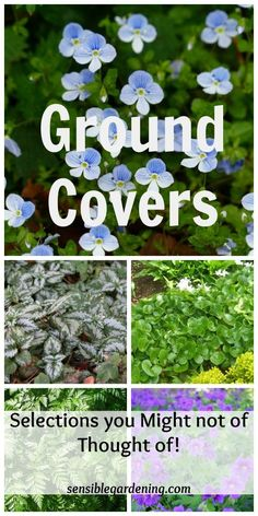 Ground Covers with Sensible Gardening. Plant varieties you might not of thought of to use as a ground cover in the garden. Info on what makes a great ground cover.