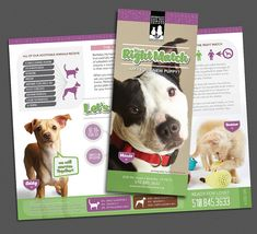 berkeley humane brochure by DK Design