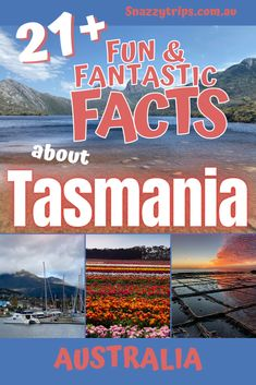 20 Fun and Fascinating Facts About Tasmania - If you would like to know more about the most southern state of Australia, these 20 fun and fascinating facts about Tasmania will provide you with some marvellous insight into this magnificent part of the world. #tasmaniafacts #tasmaniatravel #tasmaniaguide #tasmaniablog #snazzytrips Perth, Brisbane, Sydney, Best Travel Guides, Travel Advice, Travel Tips, Travel Ideas, Travel Destinations, Tasmania Road Trip