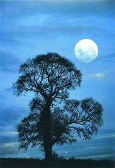 Tree and moon....not a tat but want tree of life and like idea of moon next to it