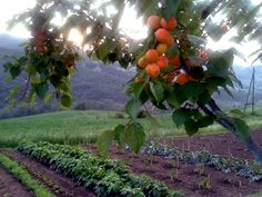 Bolognashire: frutti, orti e luce del tramonto