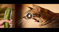 Area riservata - CaosVideo.it #animali #animals