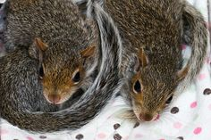 Little Squirrels
