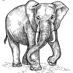 Color Paintings of Elephant Coloring Page ❤ liked on Polyvore