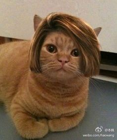 I have been hired as the new anchorwoman for PET-TV. This is my new professional look.
