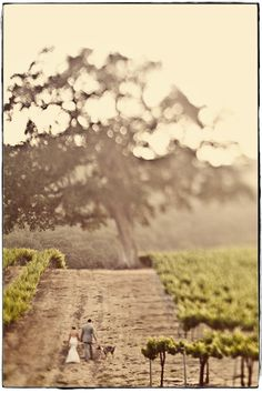 I have this unreal love for vineyards and this picture literally gets me choked up.