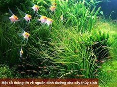 Aquarium Terrarium, Nature Aquarium, Planted Aquarium, Aquascaping, Aquarium Design, Aquarium Ideas, Takashi Amano, Aquarium Fish Tank, Fish Tanks