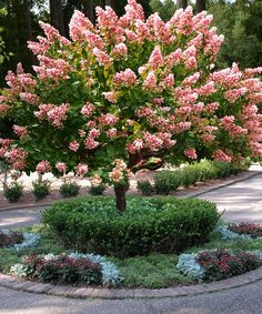 Image result for pink diamond hydrangea tree