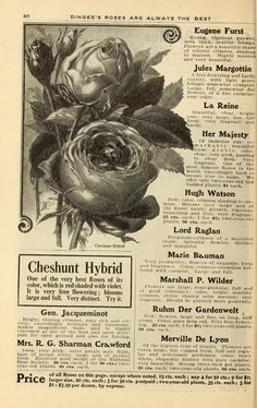 Our new guide to rose culture : 1908