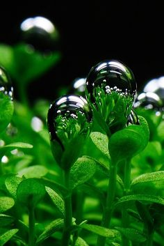 a small world in a rain drop on the tip of a plant- a small universe