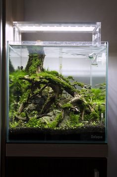For those of you fans of ornamental fish surely have an aquarium at home, and can bring an aquarium with a beautiful aquascape design into a separate Coral Aquarium, Home Aquarium, Aquarium Design, Aquarium Fish, Aquascaping, Terrariums, Unique Fish Tanks, Nano Cube, Aquarium Landscape