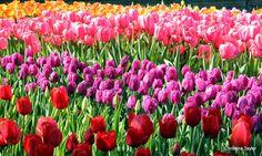 Longwood Gardens 2015 - Christina Taylor - Picasa Web Albums