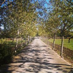 #Bunyola. #Majorca. Spain
