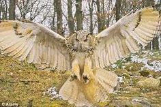 New Mexico Owl Species Wings | From a cat or dog's point of view, this would be terrifying!