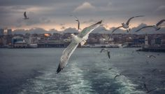 Gulls hunts on bread by ZhenyaSneg on 500px