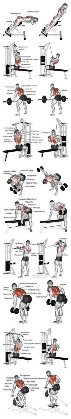 Anatomía de músculos ejercitados