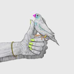 Blog — Niki Pilkington #BIRD #THUMBSUP #NEON