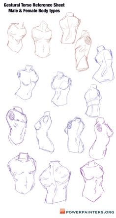 powerpainters:Hey Power Painters! Here are some torso sketches to use as a reference. It's really helpful to practice gestural anatomical bits.  REMEMBER! The core is the largest mass of our bodies, and most actions and gestures begin from it. The head and limbs are supplementary to the core of the body. www.powerpainters.org