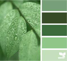 bathroom Color: Green Tones by Design Seeds - medium green, dark green, forest green, rich green, light green. Design Seeds, Colour Schemes, Color Combos, Colour Chart, Color Pairing, Color Palate, Creative Colour, World Of Color, Color Swatches