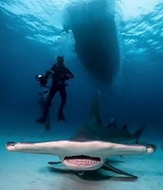 Hammerhead sharks are the only sharks that REALLY scare me