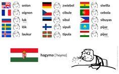 hagyma [ˈhɑɟmɑ] – onion