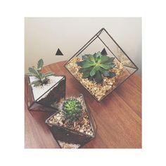 >>coleção constelação: peça mini-octans e hydra em ferro e vidro. inclui cacto/suculenta já plantado prontinho pra decorar sua casa! #cactos #suculentas #terrarios #geometrico  #campinas #homedecor #homedesign #instahome #instadecor #instaflower #succulent #succulove #succulentaddict #cactus #cactuslover #cacti #maisverdeemcasa #paisagismo #decor #paisagismocampinas #presentescorporativos  by la_da_nana http://discoverdmci.com
