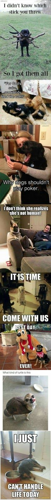 Top 8 Funniest Memes Of The Day ft. Funny Dogs (You'll see a couple Repeats from this page but that just means double grins!)