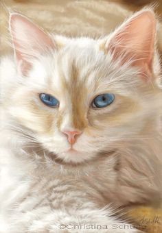 Blue eyes cat, by Christina Schulte (pastel painting), so realistic work and beautiful cat.