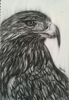 Eagle- With Charcoal