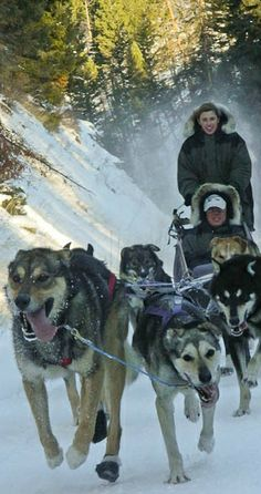 What a Montana winter adventure! Dog sledding at the Triple Creek Ranch in Darby, Montana | glaciermt.com