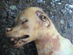 Withdraw your sponsorship of PyeongChang 2018 Olympics in S. Korea, a Dog Eating Nation! ** For those in the UK, please sign!!!
