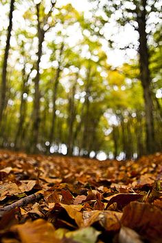 I love the sound of those fallen leaves when you walk through them.... shear bliss
