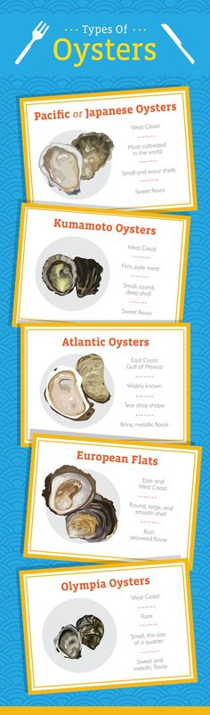 Types of Oysters - An Oyster Guide