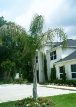 Get trees removed in Houston. We'll take any tree and remove it for very affordable prices.
