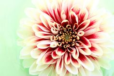 Stunning palette for shabby chic! Colour Pallette, Color Palate, Colour Schemes, Color Combinations, Dahlia Flower, Design Seeds, Colour Board, Color Swatches, Spring Green