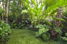 Get advice for enjoying a good looking Florida Gardening, field, or front yard. Our experts inform you all the essentials to effectively South Florida Gardening Tropical Backyard Landscaping, Tropical Garden Design, Florida Landscaping, Florida Gardening, Outdoor Landscaping, Outdoor Gardens, Landscaping Ideas, Tropical Gardens, Landscaping Software