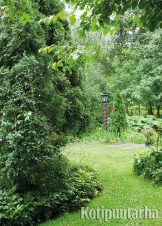 Polun voi päällystää myös nurmikolla. Tämän paremmalta ei polku voi tuntua paljain jaloin. www.kotipuutarha.fi