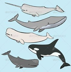 Marine Mammals Collection #GraphicRiver Cartoon illustration of various cute marine mammals. The main file contains one EPS 8 file ,the EPS file contains 5 vector object (5 marine mammals) and the background. Every object are vector, layered, and combine into a group. The buyers can easly edit the object by ungroup it and change the colors or edit the vector. Created: 4October12 GraphicsFilesIncluded: VectorEPS Layered: Yes MinimumAdobeCSVersion: CS Tags: animals #